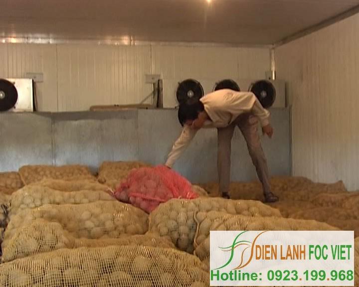 Kho lạnh bảo quản khoai tây giống Quy trình bảo quản khoai tây giống bằng kho lạnh